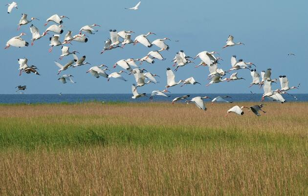 Restore the Mississippi River Delta Coalition