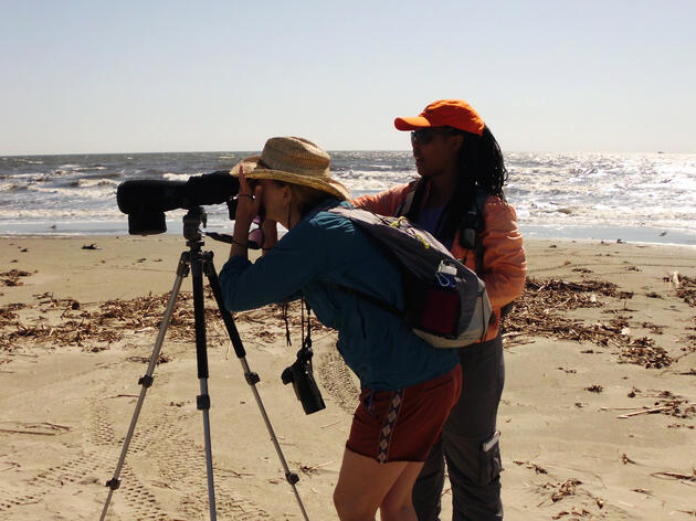 Join us for upcoming Beach Nesting Bird Conservation Workshops!