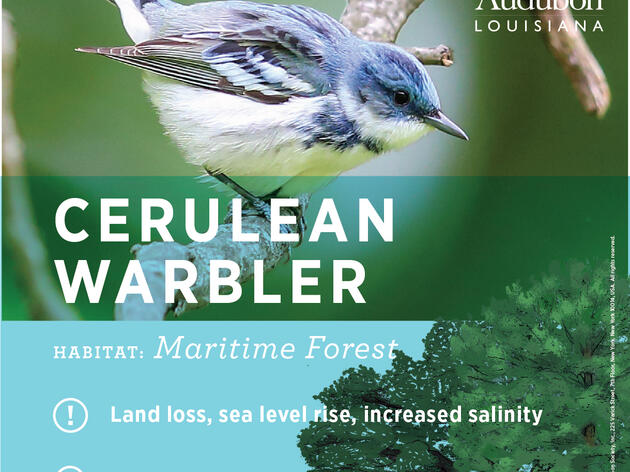 Birds of Louisiana's Coast: A Landscape of Vital Habitats