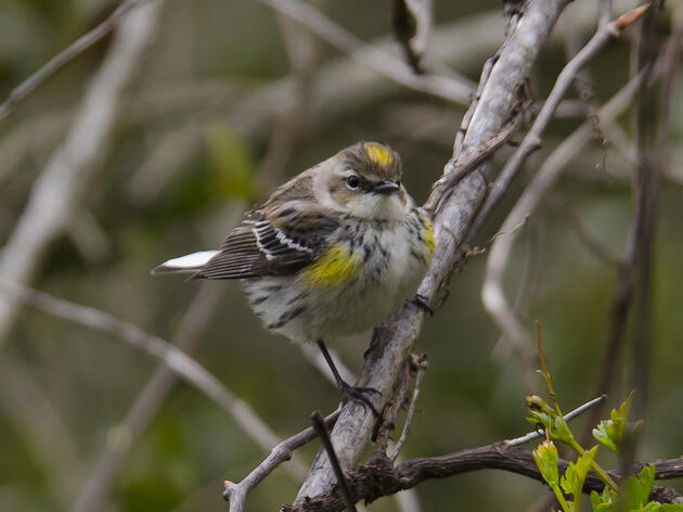 Louisiana birdwatchers count birds, along with blessings, during holiday season