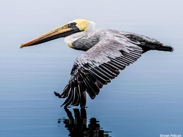 Audubon Announces Comprehensive Gulf Restoration Plan