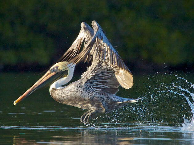 No Thanks, Congress. The Endangered Species Act Works Well As Is.