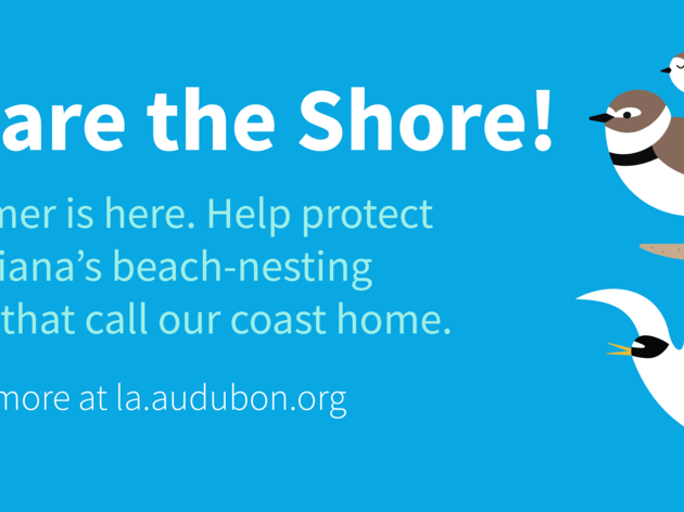Going to the beach this 4th of July weekend? Here's how you can protect birds while having fun.