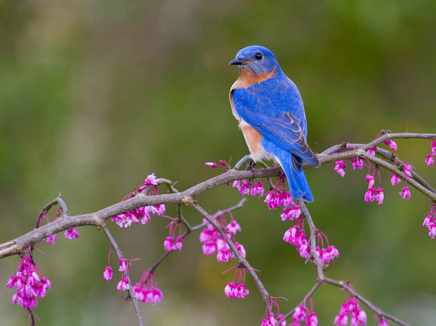 Use Your Zip Code to Attract Brilliant Birds to Your Yard This Spring