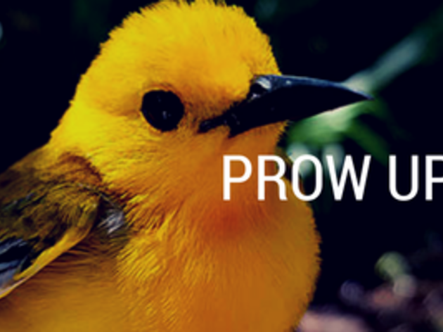 22 Geolocators Deployed During 2016 Prothonotary Warbler Breeding Season