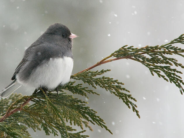 It's Year of the Bird: Join a Global Bird Census Happening Right in Your Backyard