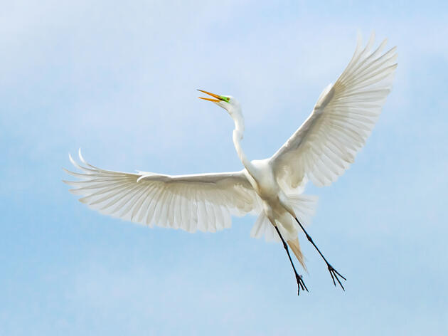 Audubon Lawsuit Seeks to Restore Protections for Migratory Birds